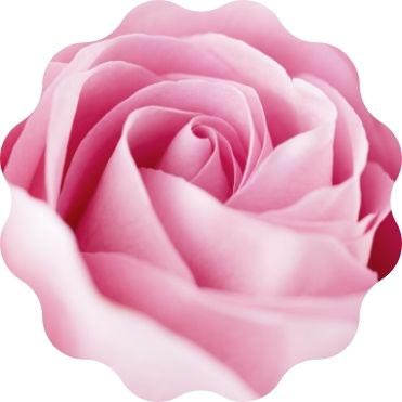 Rosenwasser Rosenhydrolat Natur Rohstoff bio
