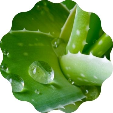 Aloe Vera Gel bio Feuchtigkeit