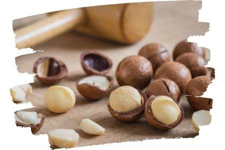 Macadamia Nuss gefährlich für Hunde