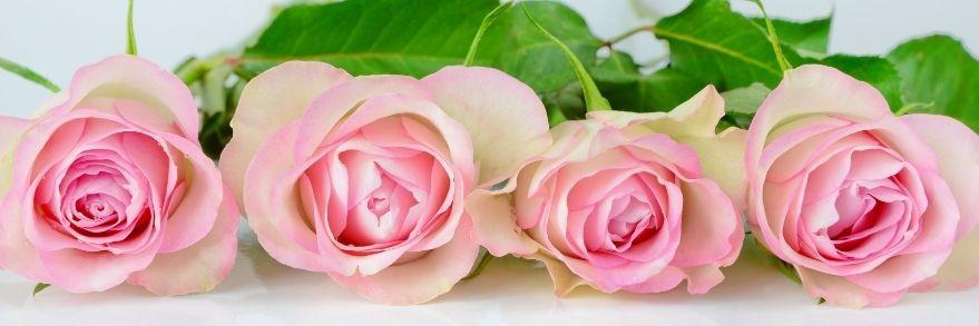 Bio Naturkosmetik aus Rosenöl Rosenwasser