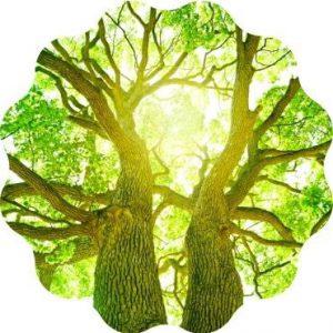 Bäume pflanzen Planeten retten