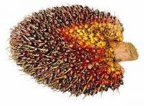 Frei von Palmöl Naturkosmetik